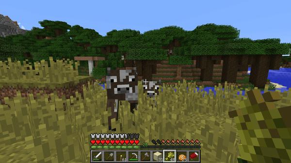 発見した牛を小麦でよび寄せます