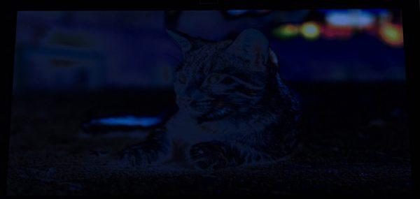 写真を表示した液晶ディスプレイを下30度の角度から見ると、かなり暗くなってしまいました。ただし普段はこの角度から見ることはないので、あまり気にしなくてもいいかもしれません